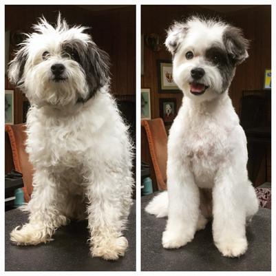 Dogs Groomed.jpeg