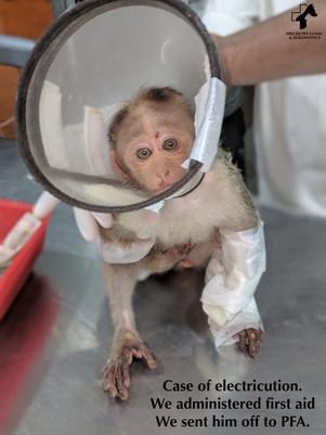 Electricuted Monkey.jpg