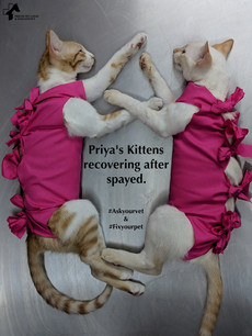 Priya's Kittens.jpg