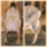 Taylor Quinn -3rd-Freshening-Udder-Colla