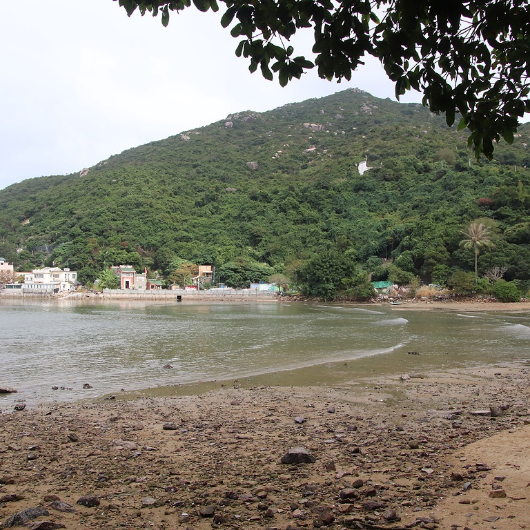 Estuary Ecology Eco-Tour in Lamma Island