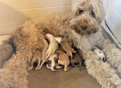 Josey and newborn pups.JPG