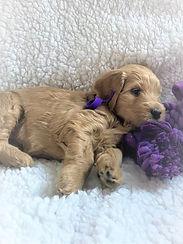 Purple Girl 5 Weeks.jpg
