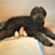 Jett X Bee Jay pups - hours old.JPG