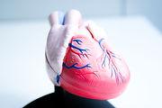 Kardiologie Berlin