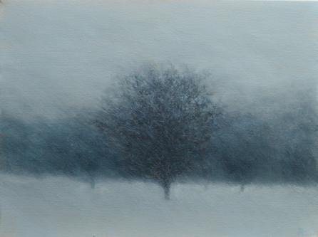 Blizzard, Sticklepath Wood, Dartmoor