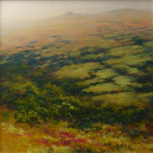 High Summer  Dartmoor