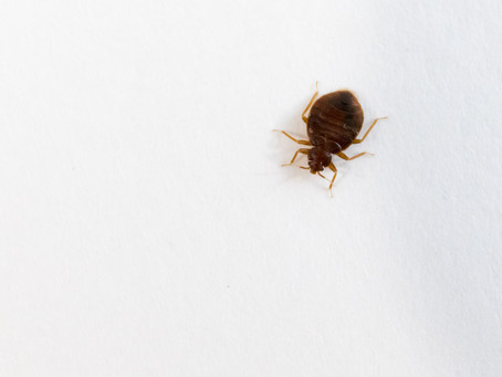 Airbnb = Bedbugs??