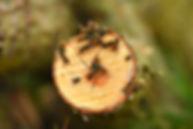yellow-jacket-wasp-3604683_1920.jpg