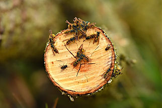 yellow-jacket-wasp-3604683_1920.jpg