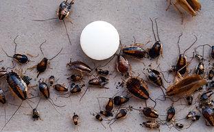 Roaches Lots.jpeg