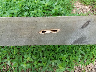 Carpenter Bee Hole.jpeg