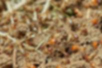 termites-3367347_1920.jpg