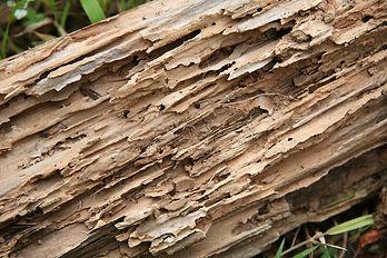 Termite Damaged Wood.jpeg