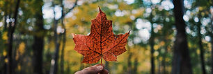 membership-maple-leaf-sliver.jpg