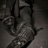 蛇タイツ/アオダイショウ