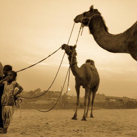 Pushkar - The sacred Hindu Town in Rajasthan