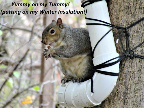 "Squirrel Feeder From 2"" PVC Pipe"