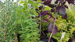 Plant Starts