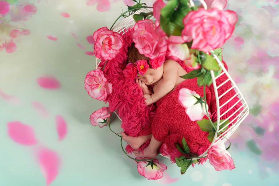 photo bebe fille panier rose fleur shade