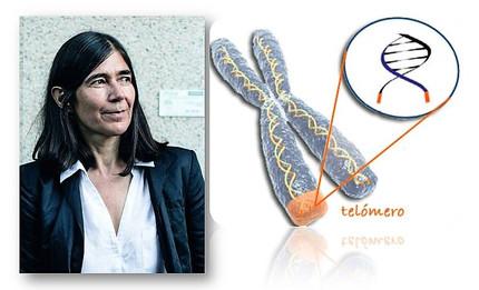 La fuente de la Eterna Juventud, los telómeros, clave para el tratamiento del Cáncer.