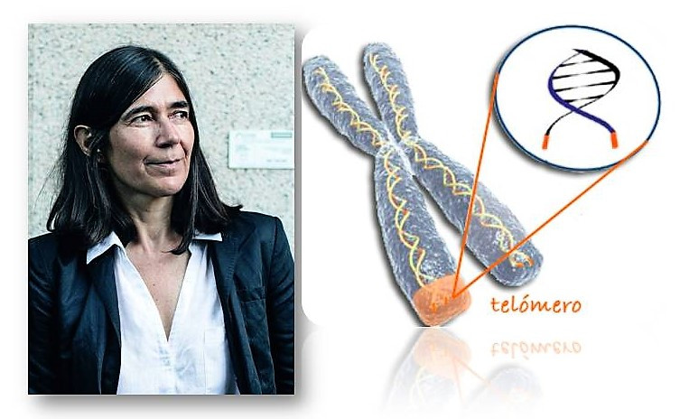 María Blasco, Telómeros