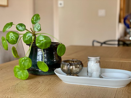 Home Activity: Plant Care - Leaf Cleaning