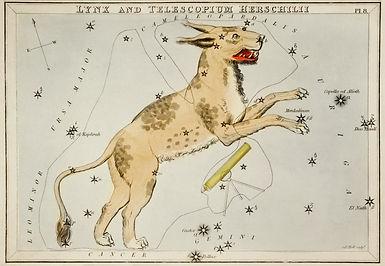Lynx by Uranias Mirror.jpg