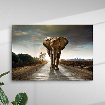 Animais (Elefante)