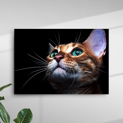 Animais (Gato)