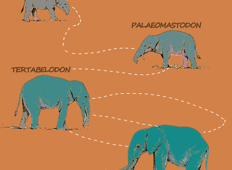 The Evolution of Elephants