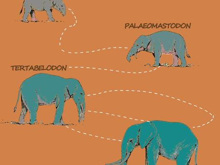 The Evolution of Elephants
