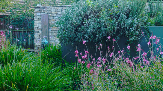 Soft plantings by Andrew Davies of Banksia Design