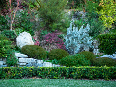 Blended native and exotic garden in Kareela with Japanese vibe