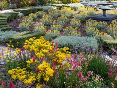 Kings Park spring display