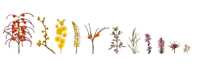 Plant canvas white_.jpg
