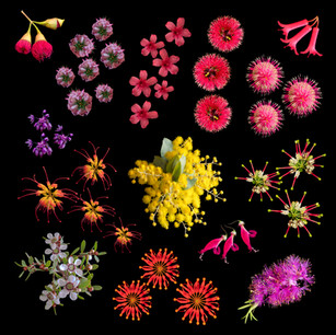 Plant canvas 1 print.jpg