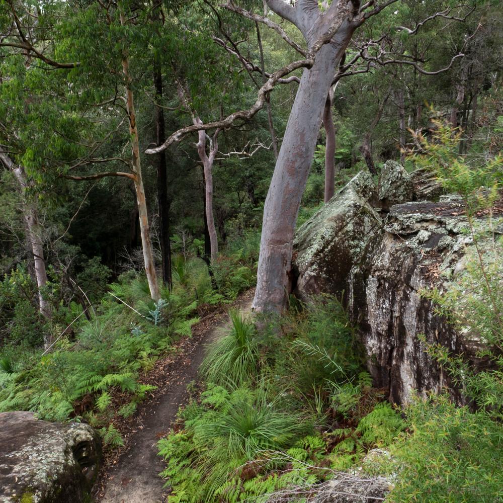 Native reserve  in Killara