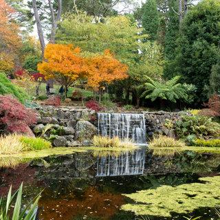 Mount Wilson garden