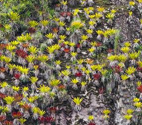 Machu_Picchu_–_Version_2.jpg