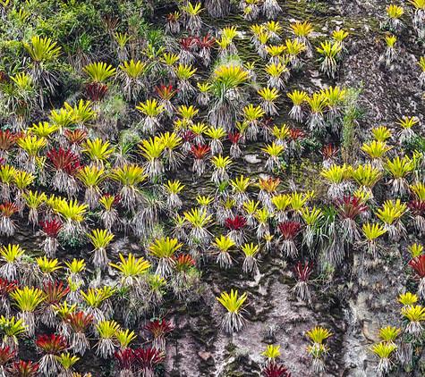 Macchu Picchu bromeliads