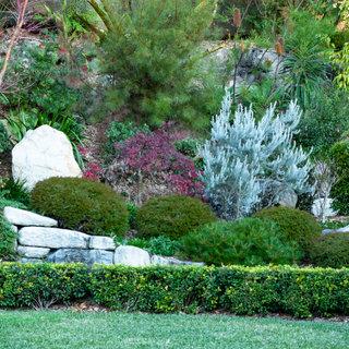 Native/blended garden