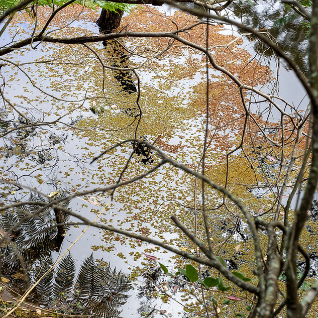 Reflections in a bushland pond