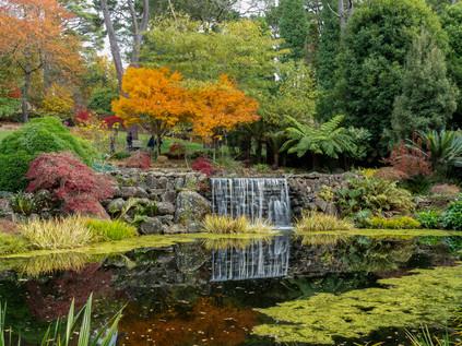 Windyridge garden at Mount Wilson