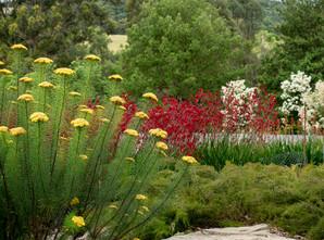 Stunning native display at Australian Botanic Garden, Mt Annan