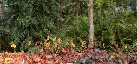 Abundance at Blue Mountains Botanic Garden, Mt Tomah