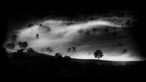 Misty morning in the Hunter Valley