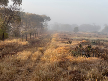 Misty morning in Dallwallinu, Western Australia