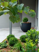 Lisa Kaplan designed garden at Gladesville