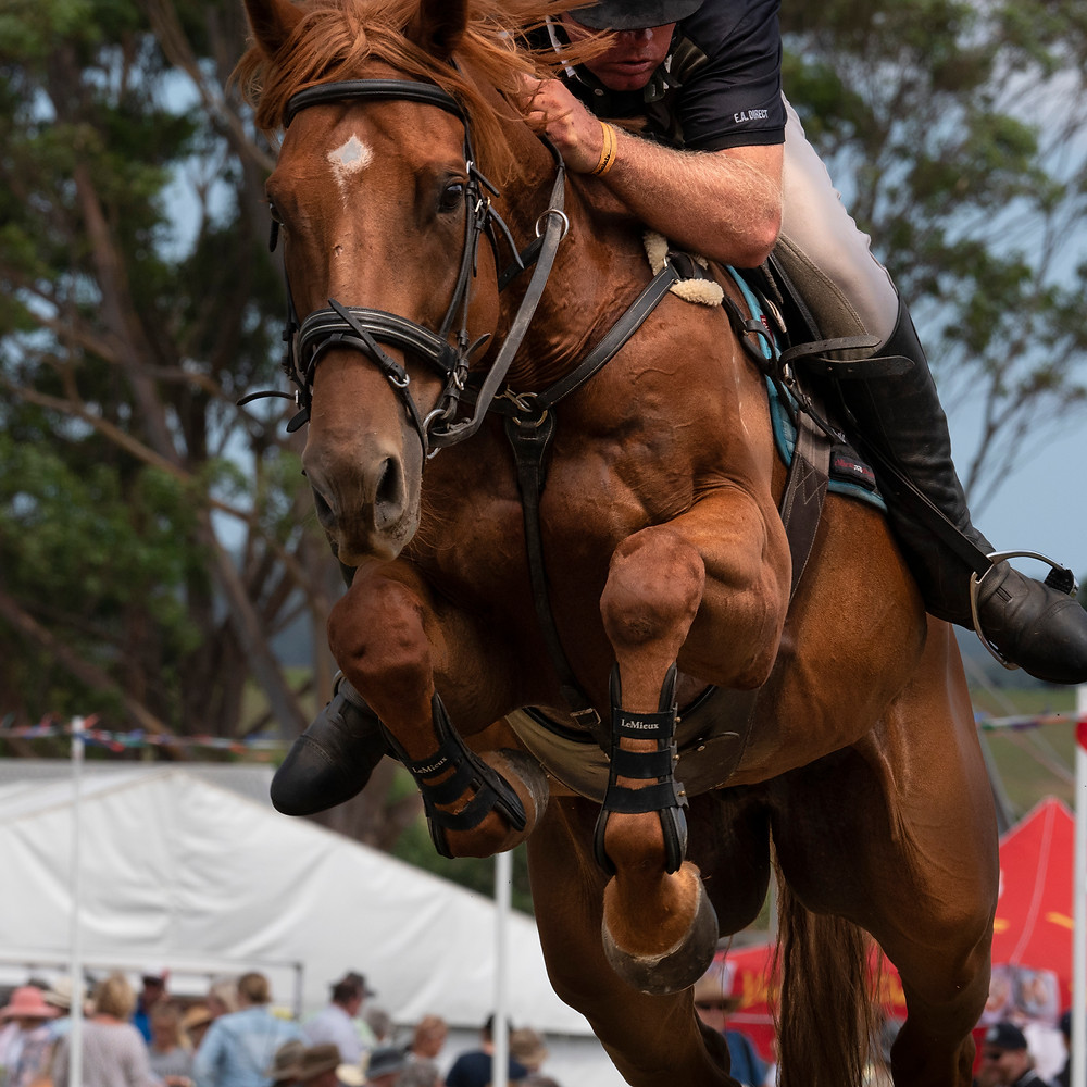 Horse, horse jumping, concentration, courage